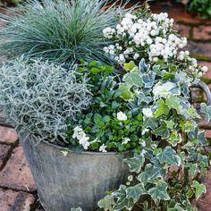 Les 19 Meilleures Images De Plantes D Hiver Plante Hiver Idees