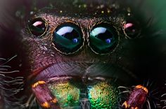 Macro-Photography by Thomas Shahan. (Not a fan of spiders, but this is amazing)