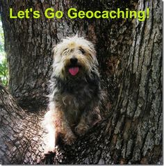 Let's Go Geocaching for Geodog Day! A great into to Geocaching with your dog and how you can do it using your smartphone.