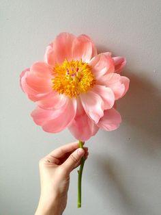 Flower from Wildfolk.