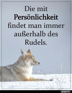 Those with personality can always be found outside the pack Die mit Persönlichkeit findet man immer außerhalb des Rudels. Those with personality can always be found outside the pack. Motivation Positive, Positive Quotes, Motivational Quotes, Work Quotes, Life Quotes, Mantra, Ways To Stay Healthy, Really Love You, Encouragement Quotes