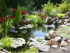 Um jardim de água é um ecosistema. Um jardim de água típico terá cerca de 50 a 75 por cento da superfície da água coberta com plantas.  Fotografia: http://www.backyard-design-ideas.com/water-garden.html