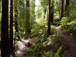 Muir Woods - Day Trip North