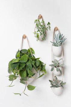 Best Breathtaking Indoor Plant Wall Garden – Page 2236664299 – Gardening Decor