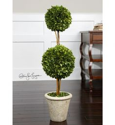 Uttermost - 60106 - Two Sphere Topiary Preserved Boxwood | Lamps.com