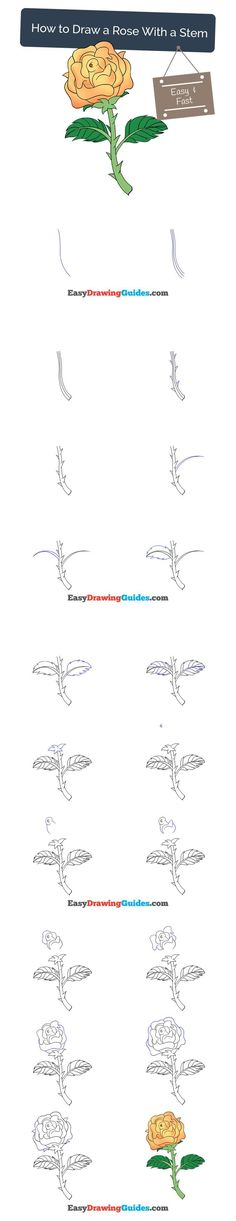 Learn How to Draw a Rose with Stem and Thorns: Easy Step-by-Step Drawing Tutorial for Kids and Beginners. #rose #drawing. See the full tutorial at https://easydrawingguides.com/how-to-draw-a-rose-with-stem/