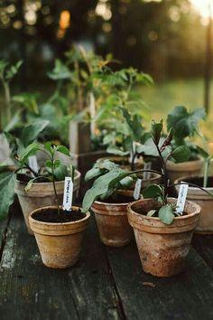 Einzug der Jungpflanzen ins Gewächshaus - All For Herbs And Plants Garden Care, Diy Garden, Dream Garden, Garden Pots, Vegetable Garden, Potted Garden, Gardening Vegetables, Garden Cottage, Garden Types