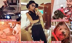 Mariah Carey's pampered Jack Russell and the Beckhams' chauffeur-driven puppy   Daily Mail Online