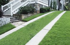 I love the idea of a green drive way... if only I could make it cheeper to install