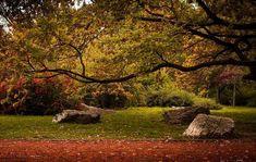 Balade dans le Bois de ville de Budapest en automne