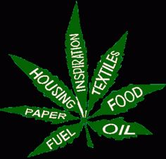 Why is Marijuana Illegal? - What Are The Health Aspects of Cannabis?