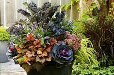 Fall gardening: Ornamental kale and cabbage planter                                                                                                                                                     More