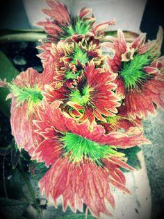Exotic plant-- Chocolate Hills, Bohol, Philippines