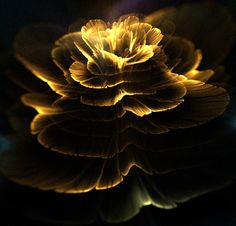 Apophysis flowers by Kondratij (Tatiana Kondratova) Rose Icon, Beautiful Flowers Wallpapers, Flower Phone Wallpaper, Touch Of Gold, Fractal Art, Yellow Flowers, Black Backgrounds, Black Gold, Deviantart