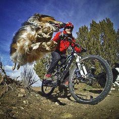 #mtb #enduro #traildog Constant Canine Companion.