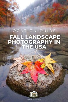 Where can you take amazing fall landscapes in the USA? Here are the best places within the United States to visit for fall colours!