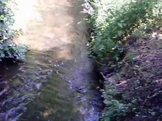 Water - Deinsuppenhuhn