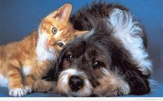 Image result for funny pictures of cats and dogs together