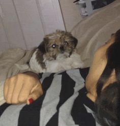New trending GIF on Giphy. funny dog cute lol fail scared fall bed boo aww afv whoops. Follow Me CooliPhone6Case on Twitter Facebook Google Instagram LinkedIn Blogger Tumblr Youtube