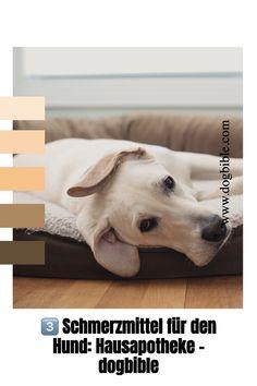 VORAB: Wir sind keine Tierärtze! Bitte suche einen Tierarzt auf, wenn du merkst, deinem Hund geht es merklich schlecht!!!Als bester Freund des Menschen ist auch das Leben unser Lieblingsvierbeiner nicht frei von Krankheiten oder Verletzungen. Lamb, Labrador, Animals, Medical Conditions, Abdominal Pain, French Bulldog Shedding, Vet Office, Animales, Animaux