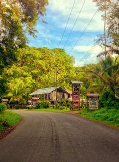 Along the road in Playa Cocles. Puerto Viejo de Talamanca in Costa Rica / Photo by Bridgette SB