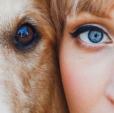 When I look into the eyes of a dog I do not see an animal. I see a living being. I see a friend. Photos With Dog, Dog Pictures, Animal Photography, Portrait Photography, Image Avion, Photo Animaliere, Girl And Dog, Me And My Dog, Foto Art