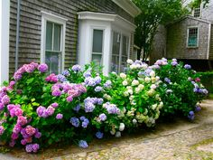 I will plant these in my yard this year, I promise myself.