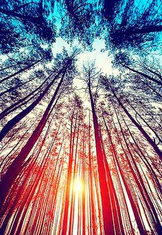 Wild Trees Inside Me