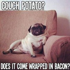 """Always relax Pug style humans.""  >> Bark at us @ www.jointhepugs.com <<  #‎PugPower #‎PugLife #‎VotePug #‎Puppy"