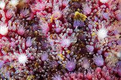 Topografías 'alienígenas' en nuevas fotos de corales - Alien Topographies Emerge in New Arctic Coral Photos