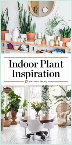 Indoor Plant Ideas - House Tour Photos | Apartment Therapy