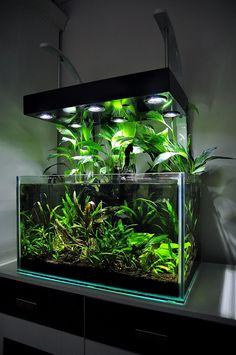 Fish Aquarium Decorations, Home Aquarium, Nature Aquarium, Aquarium Design, Turtle Aquarium, Marine Aquarium, Aquarium Fish Tank, Planted Aquarium, Betta