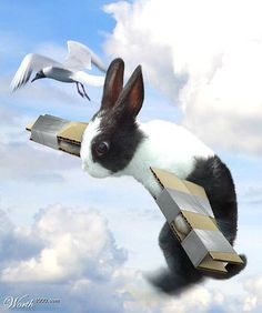 Cardboard Bunny Wings Amongst the Clouds