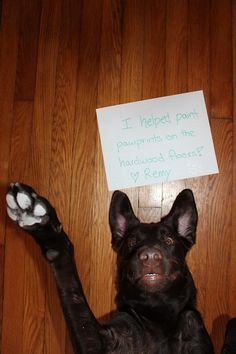 Dog Shaming from Pet Shaming .net