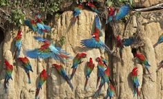 """FORESTE PLUVIALE DI TAHUAMANU (PERU' )- Nella regione peruviana di Madre de Dios, ospita giaguari, innumerevoli specie di uccelli tropicali e le ultime foreste di mogano del Sudamerica. Ambiente delicatissimo, oggi a rischio per la deforestazione, il commercio di legname e soprattutto l'industria mineraria, che scarica nelle sue acque il mercurio sottoprodotto dell'astrazione aurifera.  Maggiori info sulla pagina Facebok  """"Save the Tahuamanu Forest"""". (foto: """"Save the Tahuamanu Forest)"""