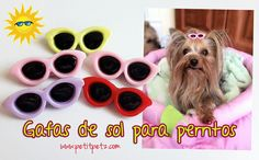 Pasadores modelo Gafas de Sol en variados colores para Peluquería Canina 😎🌞