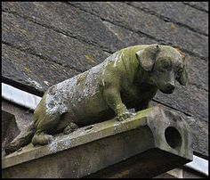 Dachshund Doxie ~ sits atop residential water down spout / gutters Dachshund Funny, Dachshund Art, Daschund, Dachshund Breed, Dachshund Quotes, Gremlins, Weenie Dogs, Doggies, Dog Art
