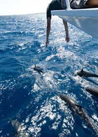 Eco Dolphin / Sunset Cruises in Destin, Florida