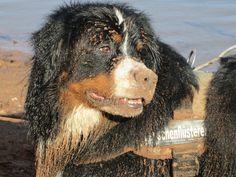 Hunde Foto: Barbara und Ludwig - Sandmonster Hier Dein Bild hochladen: http://ichliebehunde.com/hund-des-tages #hund #hunde #hundebild #hundebilder #dog #dogs #dogfun #dogpic #dogpictures