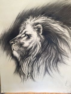 This is an Original Art piece. 10/2015  My Majestic King - Charcoal Lion was drawn on a 20 inch wide by 30 inch illustration paper. The planned live area and cropping was for an 18 inch wide x 24 inch high window/mat opening.  This piece was one of my first charcoal illustrations in many years. I admit I was testing new and old charcoals, getting comfortable with charcoal techniques and details. I'm pretty happy with the way it turned out. Jerry B
