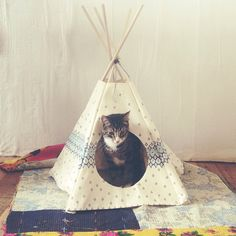 @Free People » Love this little cat teepee!