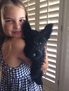 9 week old Scottish Terrier puppy