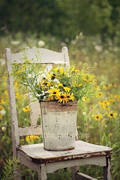 Fields of flowers... reminds me of catching butterflies as a child.  Love Black eyed susans too!