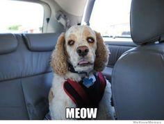 stoner dogs meme, 10 dog meme, funny dog memes, dog memes (Page Funny Meme Pictures, Funny Memes, Hilarious, Fail Pictures, Animal Memes, Funny Animals, The Best Jokes Ever, 420 Memes, Snoop Dogg