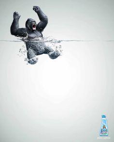 Lenor fabric softener: Gorilla