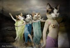 Belly Dancing Cats