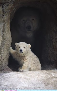 "Polar Bears in a cave... ""I got a feeling of foreboding."""