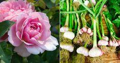 12 växter som trivs att planteras ihop   ELLE