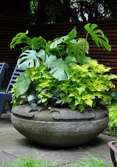 traditional garden urns and contemporary containers container gardening flowers gardening perennials Garden Urns, Garden Paths, Garden Landscaping, Landscaping Ideas, Full Sun Container Plants, Container Gardening, Flower Containers, Gardening Vegetables, Front Porch Plants