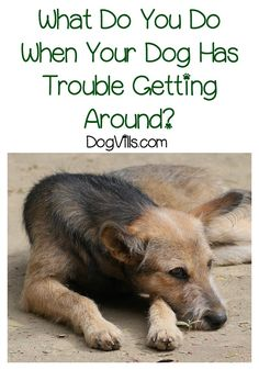 Dealing with dog health problems that limit mobility? Check out these dog accessories to help your pooch get around! Dealing with dog health problems that limit mobility? Check out these dog accessories to help your pooch get around! Easiest Dogs To Train, Best Dog Training, Potty Training, Training Plan, Dog Care Tips, Pet Care, Dog Behavior, Dog Supplies, Dog Accessories
